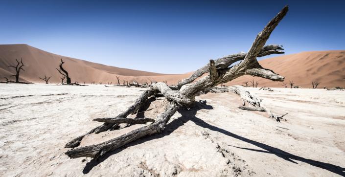 Namibia sigridspinnox  scaled