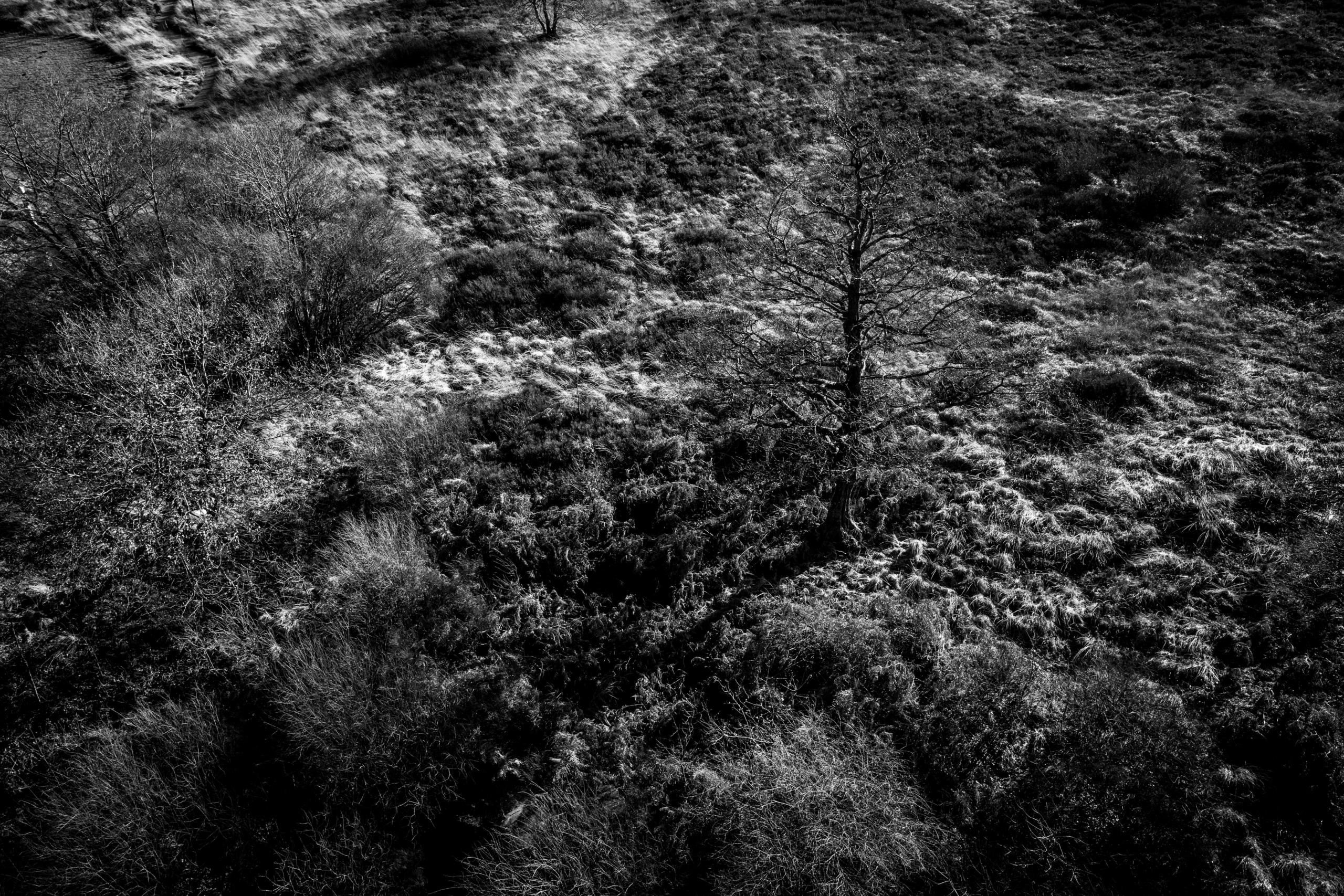 Landscape sigridspinnox  scaled